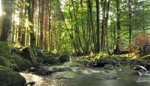Foreste della Sardegna